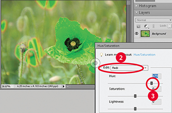 Elements Level 1 - LLearn how to change any color in an image