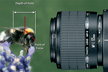 Macro Photogrpahy Level 1 - Learn how to maximize depth of field